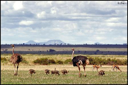 avestruz parquejpg