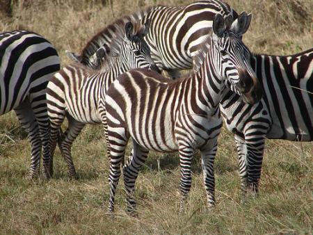 fauna-kenia-jpg.jpg