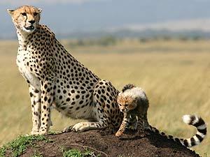 safari keniajpg