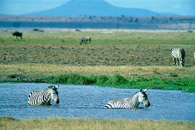 parque nacional de amboselijpg