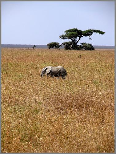 africa-paisaje.jpg