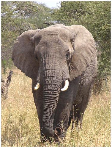 kenia-elefante.jpg