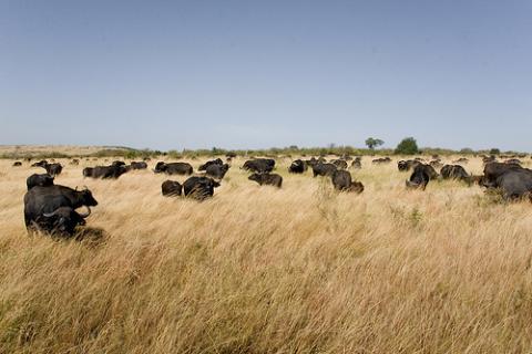 safaris-kenia.jpg