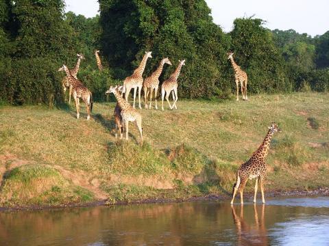 safari-kenia.jpg