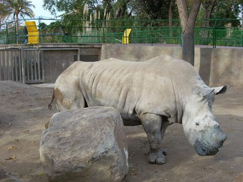 rinoceronte.jpg
