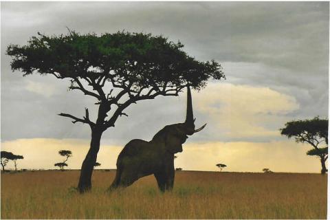 elefante-kenia.jpg