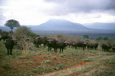 animales-safari.jpg