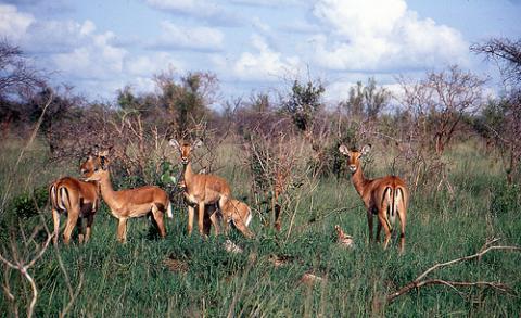 kenia-animales.jpg